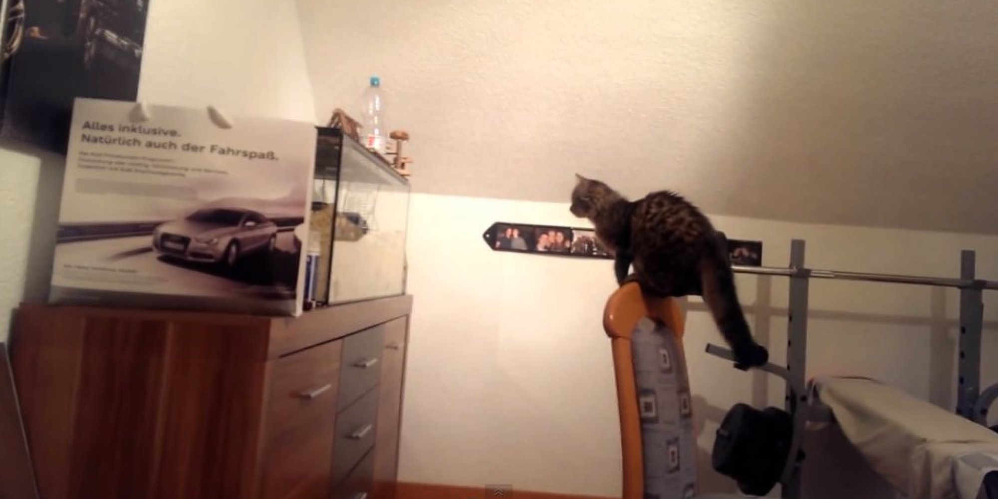 This Cat Jumped Straight Into An Aquarium Wall Trying To