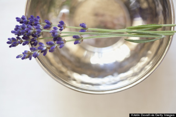 lavender sleep
