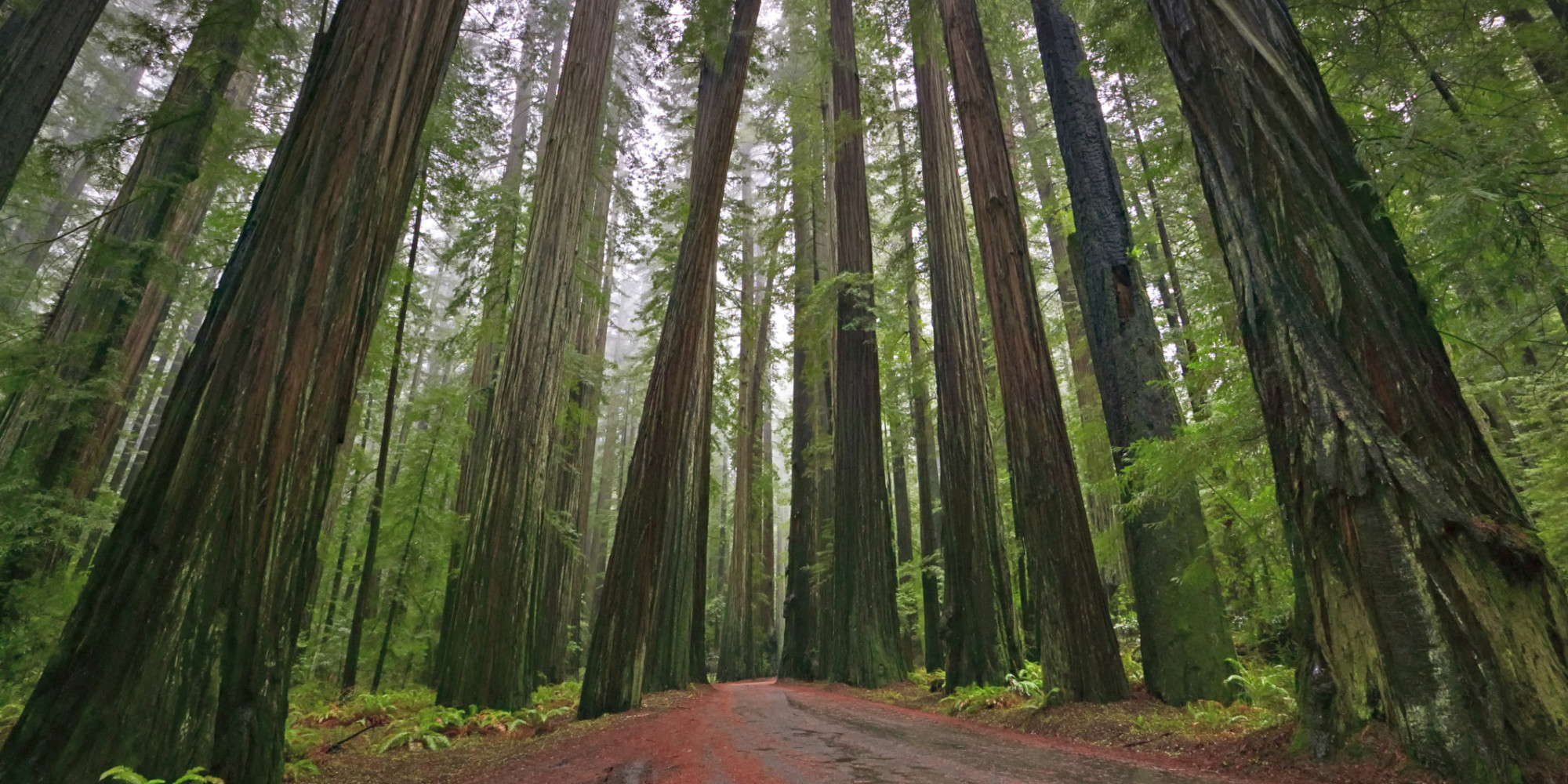 Redwood Natinal Forest By Isaac Niemeyer Thinglink