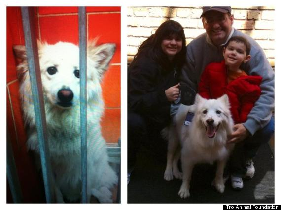 Rescue Dogs' Before And After Photos Prove Love Is All You