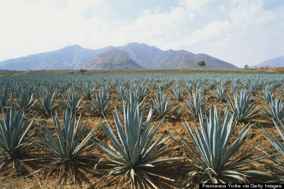 mexico tequila