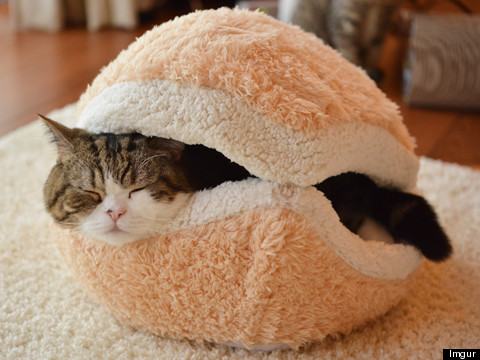Cat. Burger. Pillow.