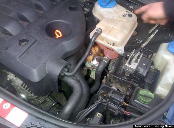 puppy in car engine