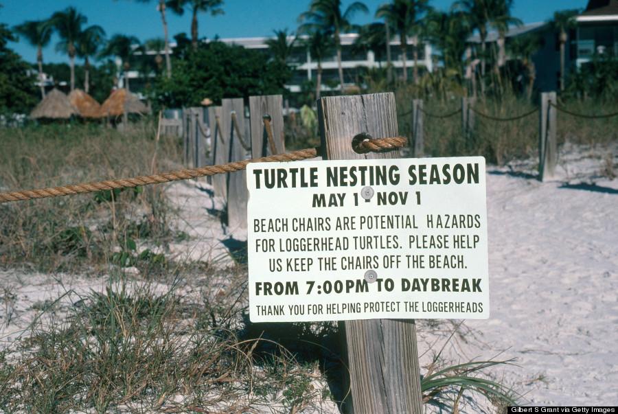 sea turtle sign