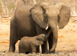 Top 5 Ways to Save Our Elephants From Extinction