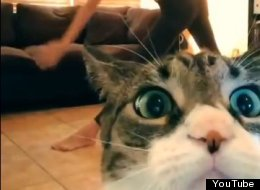 WATCH: Cat Interrupts Yoga Session