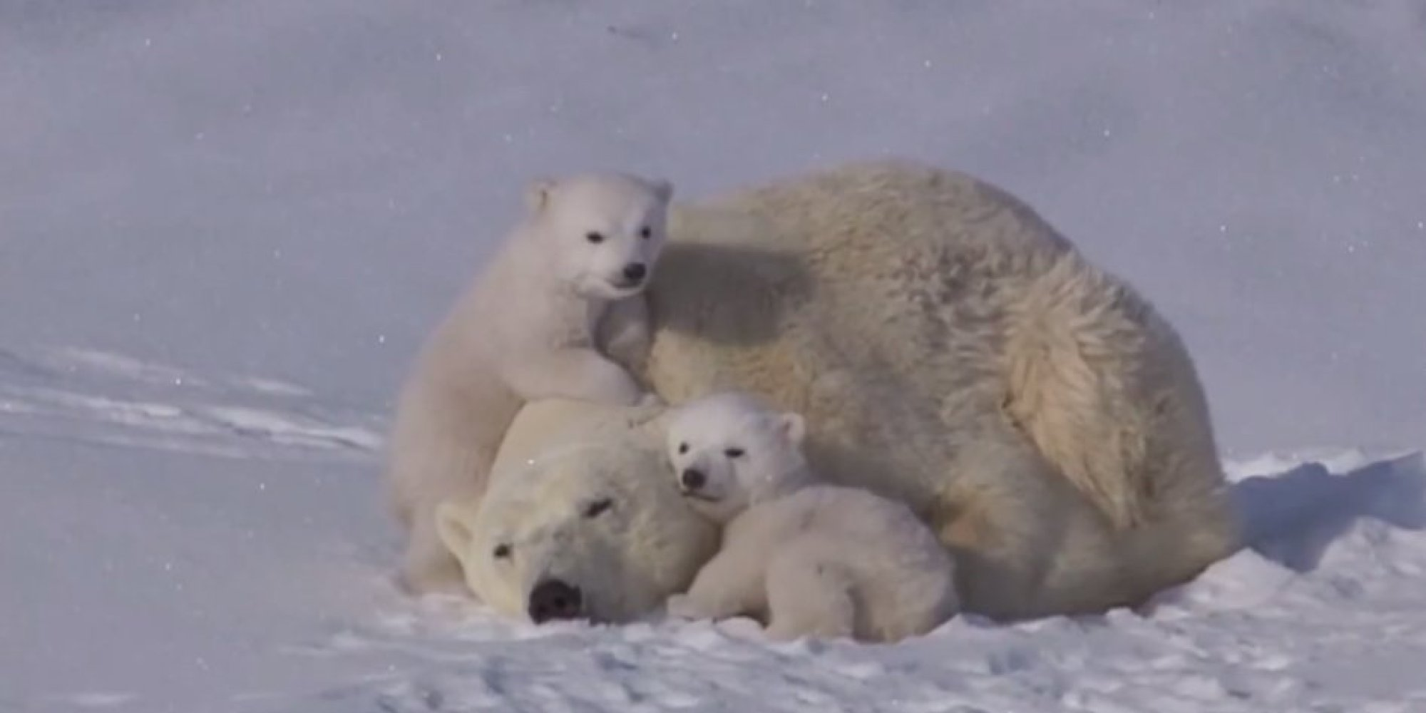 детям про белого медведя видео