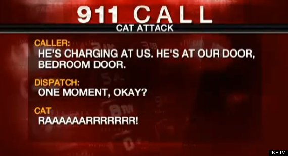 lux cat 911 call