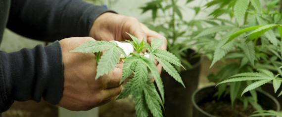 marijuana dispensary location find