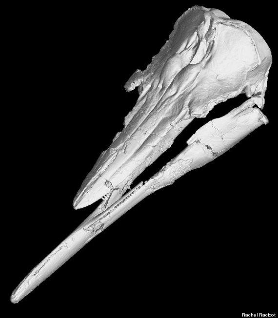 extinct porpoise