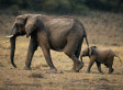 UN Helen Clark: Rural Poverty Is Fuelling the Poaching Crisis