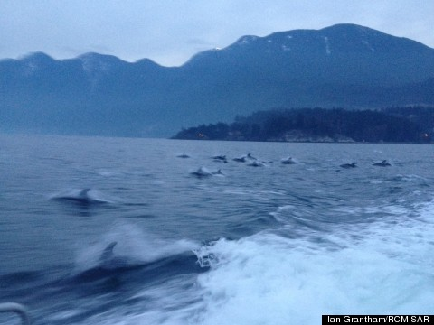 dolphins howe sound