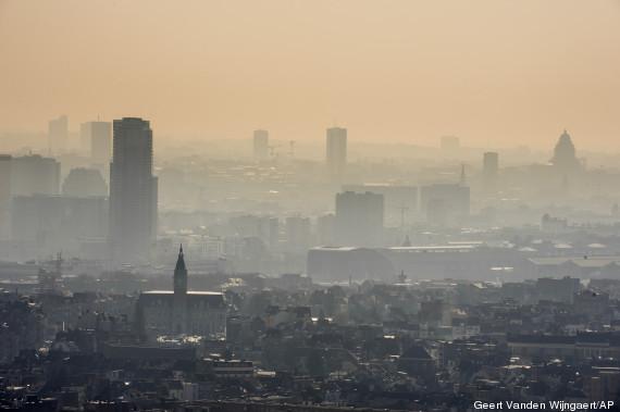 belgica poluida