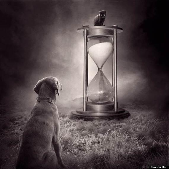 dog hour glass
