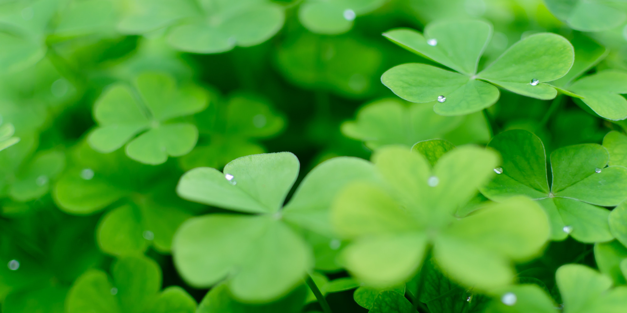 Celebrate St Patricks Day With 15 English Words Derived