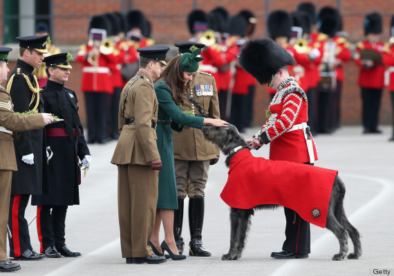 will and kate pup