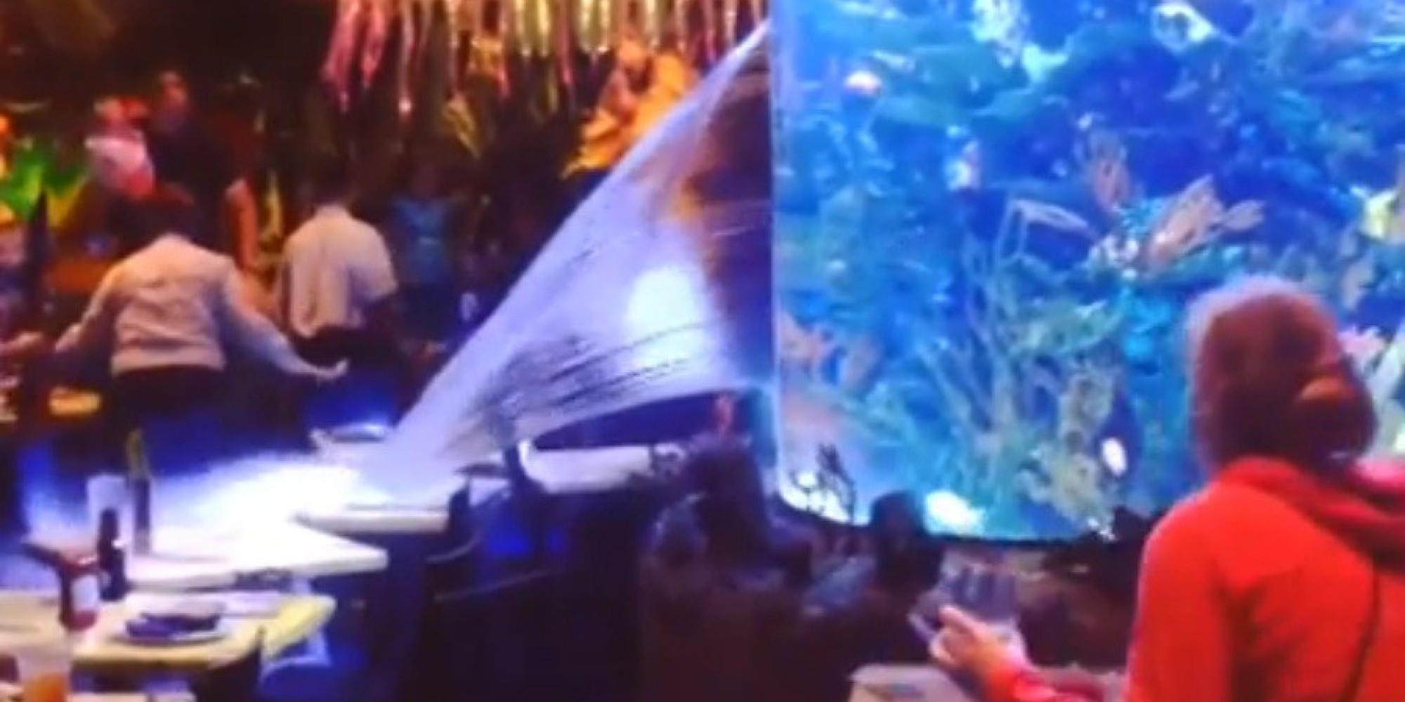 T rex cafe fish tank bursts at downtown disney restaurant for Fish tank video