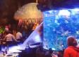 T-Rex Cafe Fish Tank Bursts At Downtown Disney Restaurant (VIDEO)