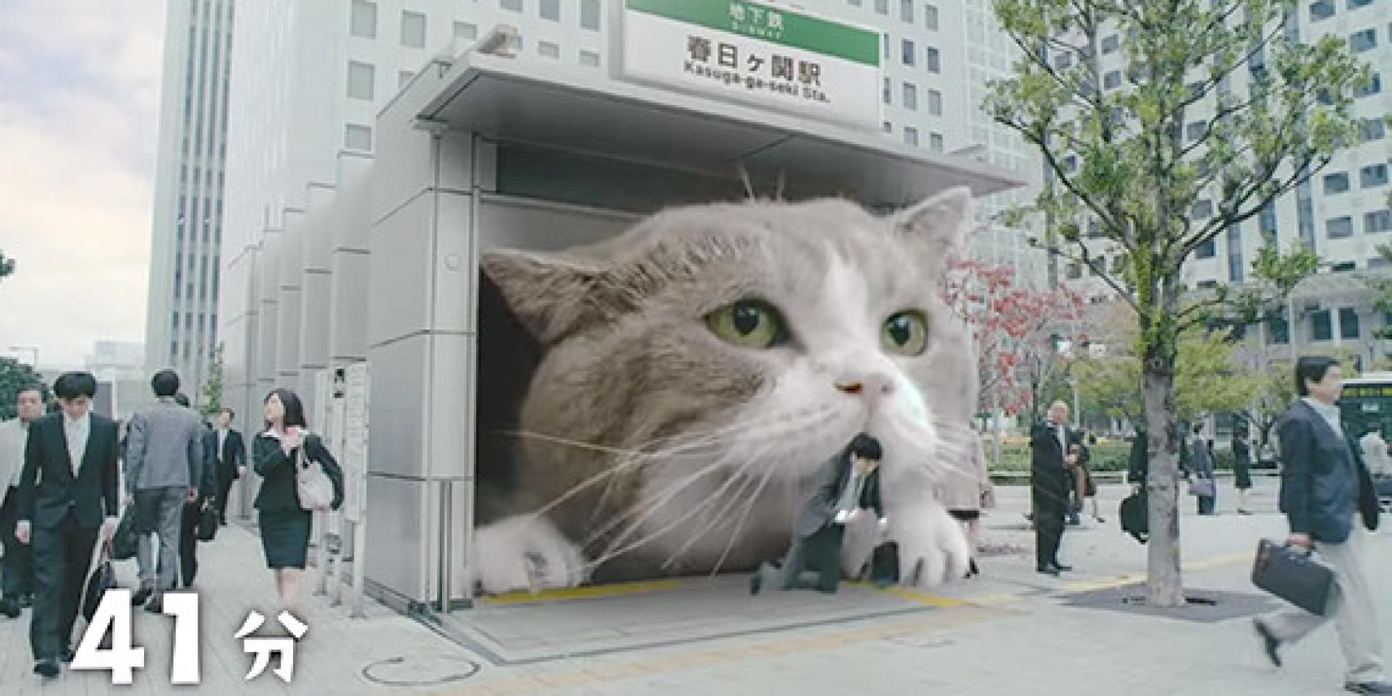 Mία γιγαντιαία γάτα...