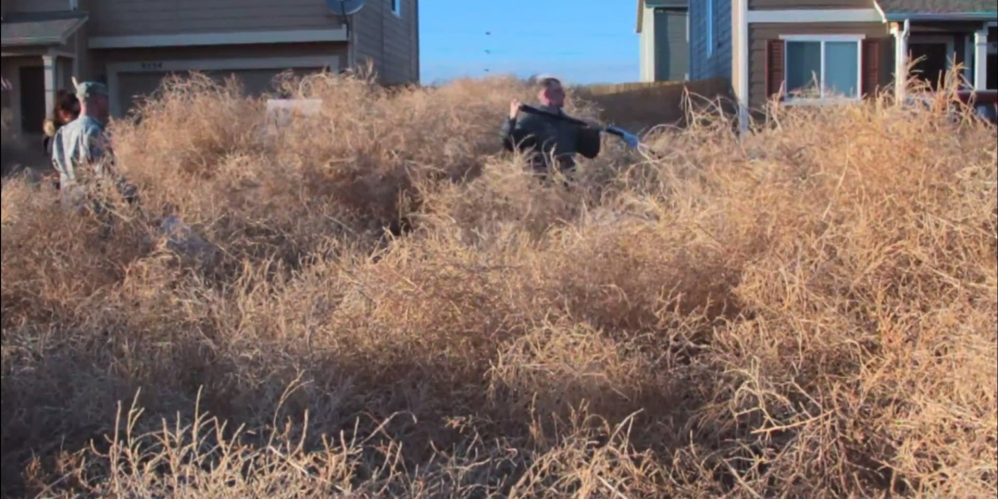 Colorado Tumbleweed Problem Is No Joke We Cant Get Out Of Our