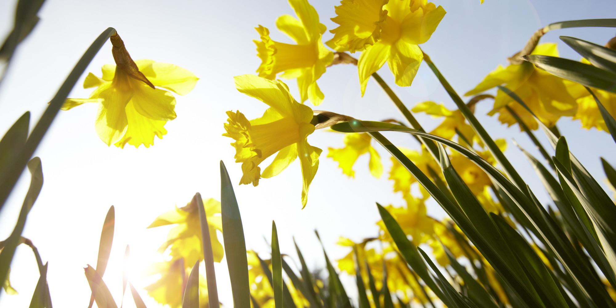 Prvi pomladni dan