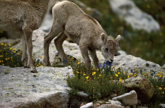 The 50 Cutest Baby Animals Of America State By State