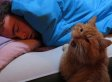 'Cat Alarm Clocks' Are The Best Alarm Clocks