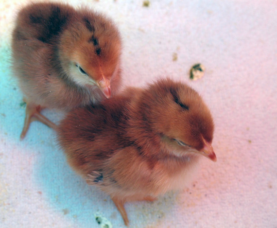 how to become a wildlife rehabilitator in ohio