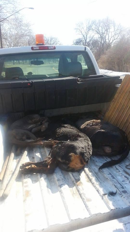 dead dogs 3