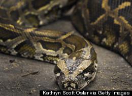 WATCH: Snake Study Reveals Surprising Skill