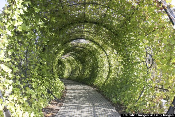 A Beautiful Tourist Garden Full Of Plants That Could Kill You