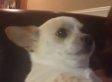 Spoiler Alert: Movie Spoiler Dog Spoils Movie