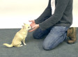 Turns Out That Dogs React To Magic Tricks Just Like People Do