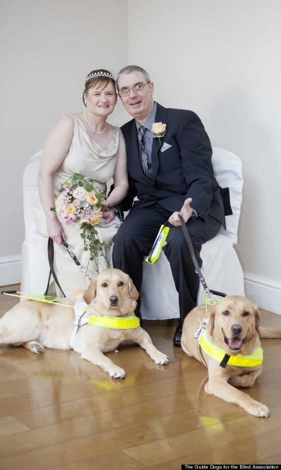blind guide dogs