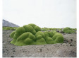 A Photographic Exploration Of The Oldest Living Things In The World