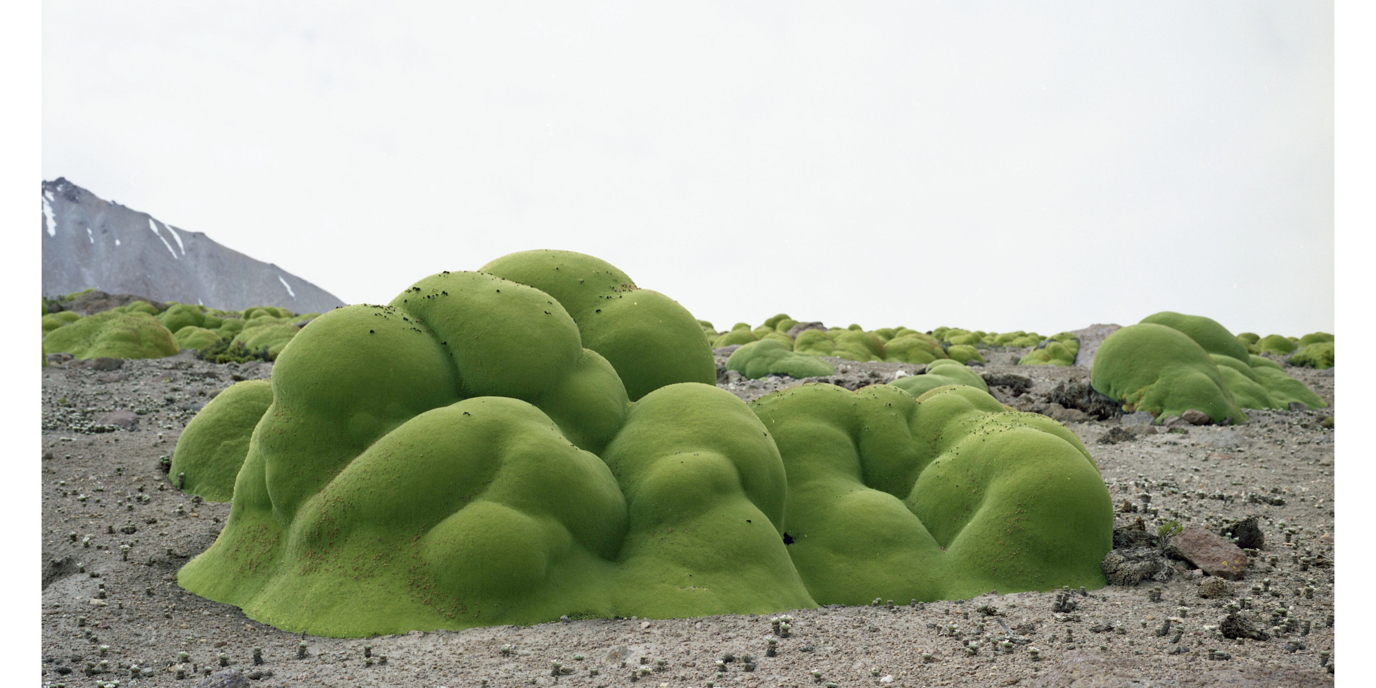 11 Of The Oldest Living Things In The World