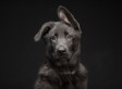 Stunning Photo Series Highlights The Beauty Of Black Dogs That Are Often Overlooked In Adoption