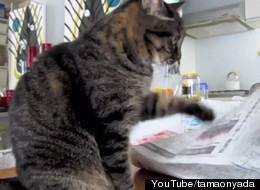 This Cat Really Loves Touching Paper, May Need Intervention