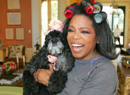Oprah Dog Sophie