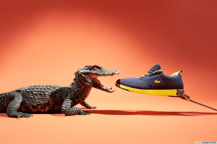 sneakers crocodile