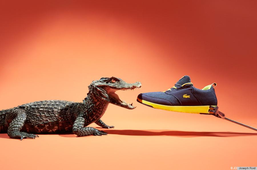 sneakers crocodile