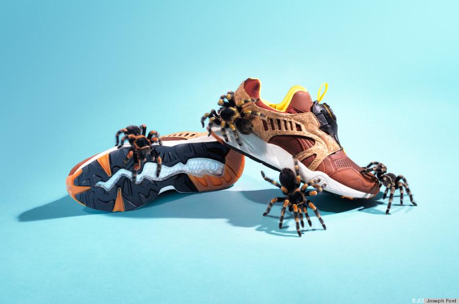 sneakers spiders