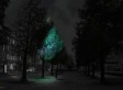 In The Not So Distant Future, Glow-In-The-Dark Trees Could Replace Street Lights
