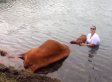 Drowning Bull Rescued By Sheriff's Deputies And Firefighters In Florida