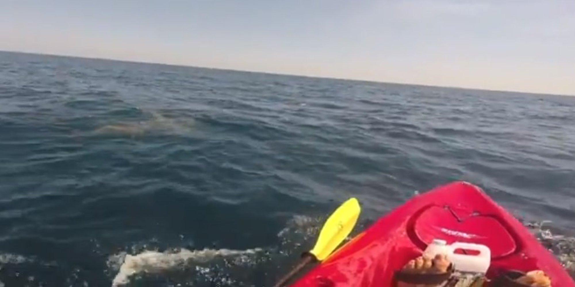 Hammerhead Shark Drags Man in