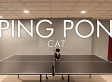 Cat Doesn't Understand Rules Of Ping Pong, Still Wins Our Hearts