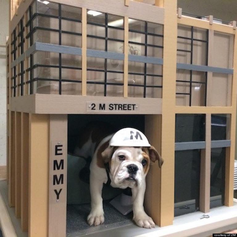 emmy bulldog