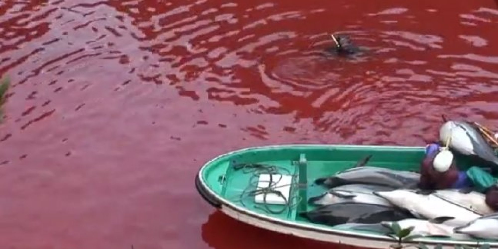 the cove director releases raw footage of horrific