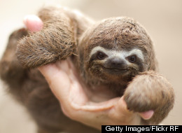 10 Reasons We've Been Too Slow In Responding To Climate Change, As Told By Sloths
