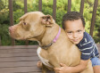 Maryland Does Right By Pit Bulls, Says They Aren't Inherently Dangerous (UPDATED)